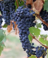 Good grapes!