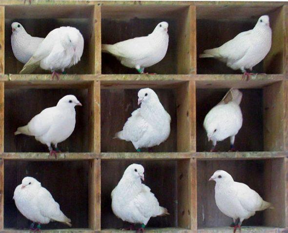 10 pigeons into 9 boxes? Someone has a roommate.