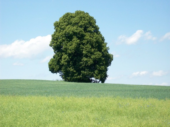 A picture of a tree standing in a field.