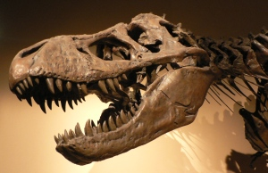 Skull of a Tyrannosaurus Rex at Palais de la Decouverte